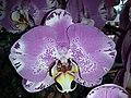 HKCL 香港中央圖書館 CWB 展覽 exhibition flowers February 2019 SSG 11.jpg