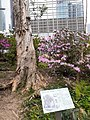 HK 中環 Central 遮打花園 Chater Garden flora green leaves n trees March 2020 SS2 66.jpg
