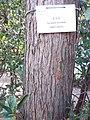HK CWB 銅鑼灣 Causeway Bay 維多利亞公園 Victoria Park tree trunk n green leaves December 2019 SSG 01.jpg