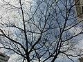 HK Yau Ma Tei Shanghai Street Plyground tree n sky Feb-2014.JPG