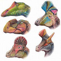 definition of ornithopod