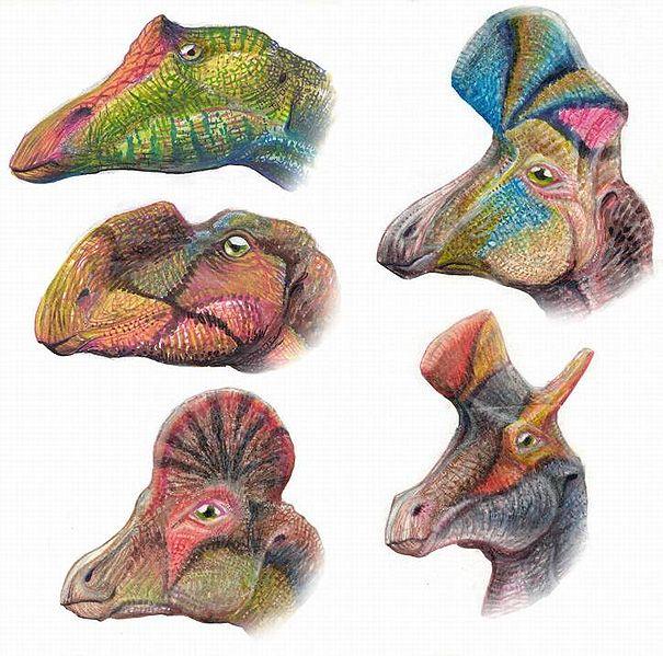 File:Hadrosauroids.jpg