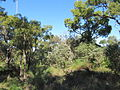 Hamersley tower reserve 2.jpg