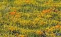 Happy Flower Field (187362253).jpeg