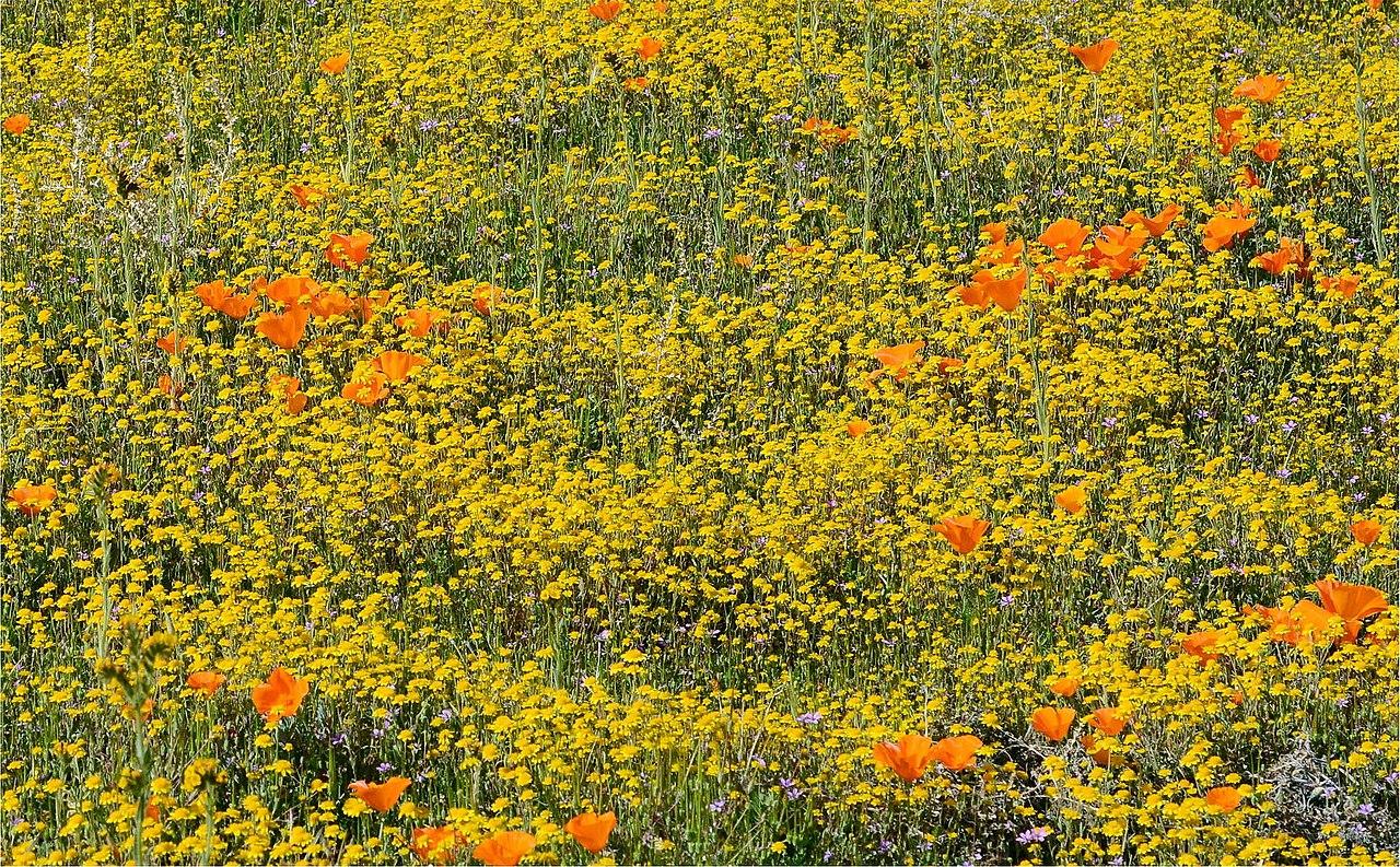 File Happy Flower Field 187362253 Jpeg Wikimedia Commons