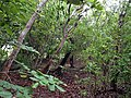 Hardwood Hammock - panoramio.jpg