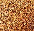 Haricot rouge cultivé au Bénin.jpg