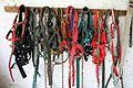 Harnesses (5072712803).jpg