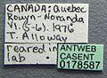 Harpagoxenus canadensis casent0178587 label 1.jpg