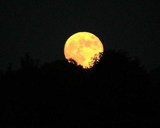 Harvest moon (1)