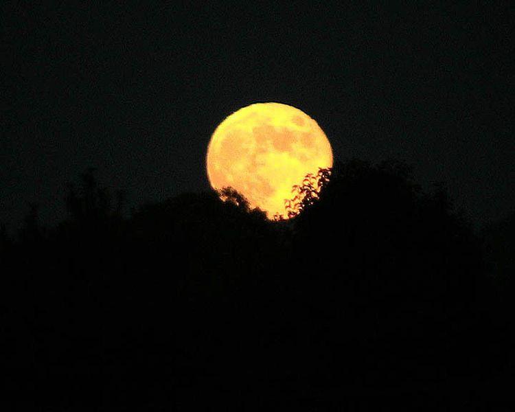 File:Harvest moon (1).jpg