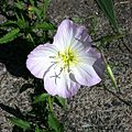 Have a great Sunday, heading to Church. Flower in my garden, I have no idea what these are called..jpg