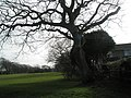 Hayling Park - geograph.org.uk - 710103.jpg