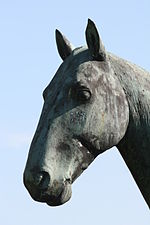 Head of the sculpture of the horse Meteor.jpg