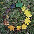 Herbstlaub-Ahorn.jpg