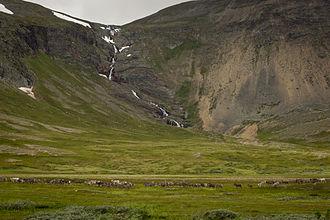 Porsanger - View of a reindeer herd near a waterfall in Porsanger