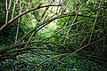 Highdown Gardens, Worthing, dead branches 2.jpg