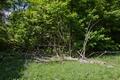 Hoher Vogelsberg Breungeshainer Heide Geiselstein Goldwiese coarse woody debris.png