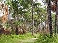 Honeymoon Island State Park - panoramio (1).jpg