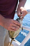 Hundreds hooked on Morehead City fishing trip 140531-M-BN069-025.jpg