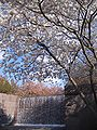 IMG 2317 - Washington DC - FDR Memorial - Cherry Blossoms.JPG