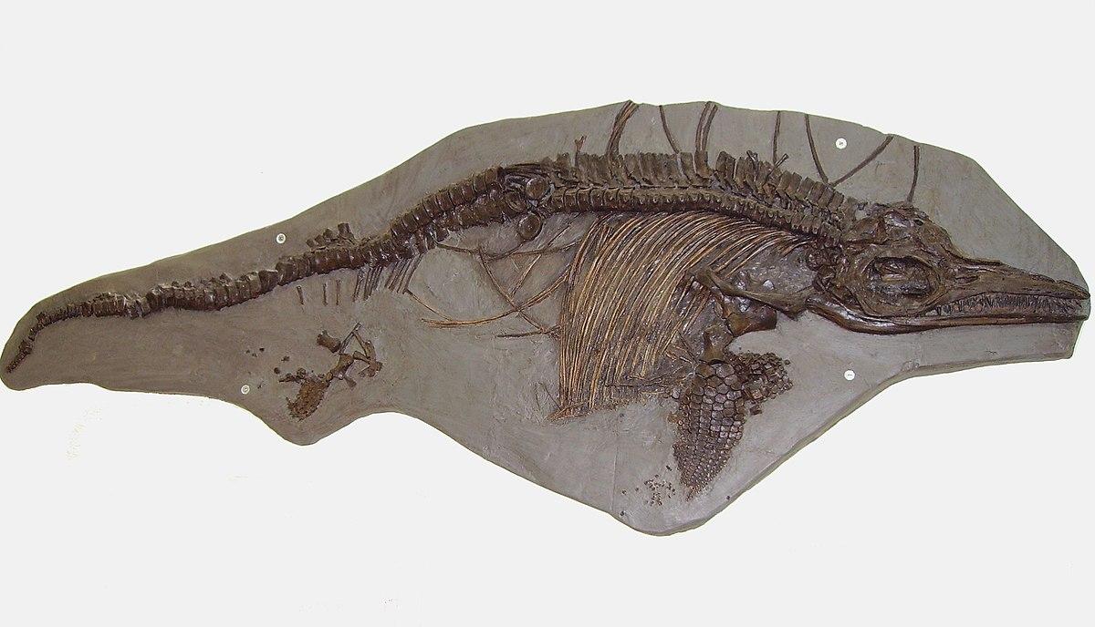 Картинки по запросу Ихтиозавр род