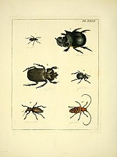Illustrations of natural history (Pl. XXXII) (8119063567).jpg