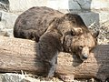 Im Zoo Hoyerswerda - Bärengehege - panoramio.jpg