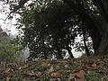 Indian Botanic Garden - Howrah 2012-01-29 1667.JPG