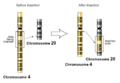 Insertion-genetics.png
