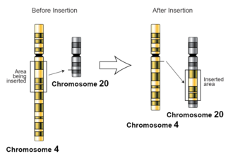 Insertion (genetics) - An illustration of an insertion at chromosome level