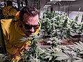 Inside a cannabis grow.jpg
