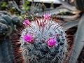 "Iran-qom-Cactus-The greenhouse of the thorn world گلخانه کاکتوس ""دنیای خار"" در روستای مبارک آباد قم- ایران 30.jpg"