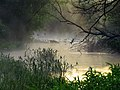 Irpin river fog1.JPG