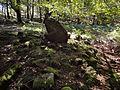 Irurita Barrengo zutarria.jpg