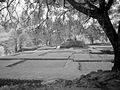 Iximche - View of Plaza C Palace from Temple 3 (3679347652).jpg