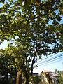 JMatungaoBulacan9273fvf 20.JPG
