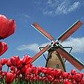 JP-12 Sakura windmill.jpg