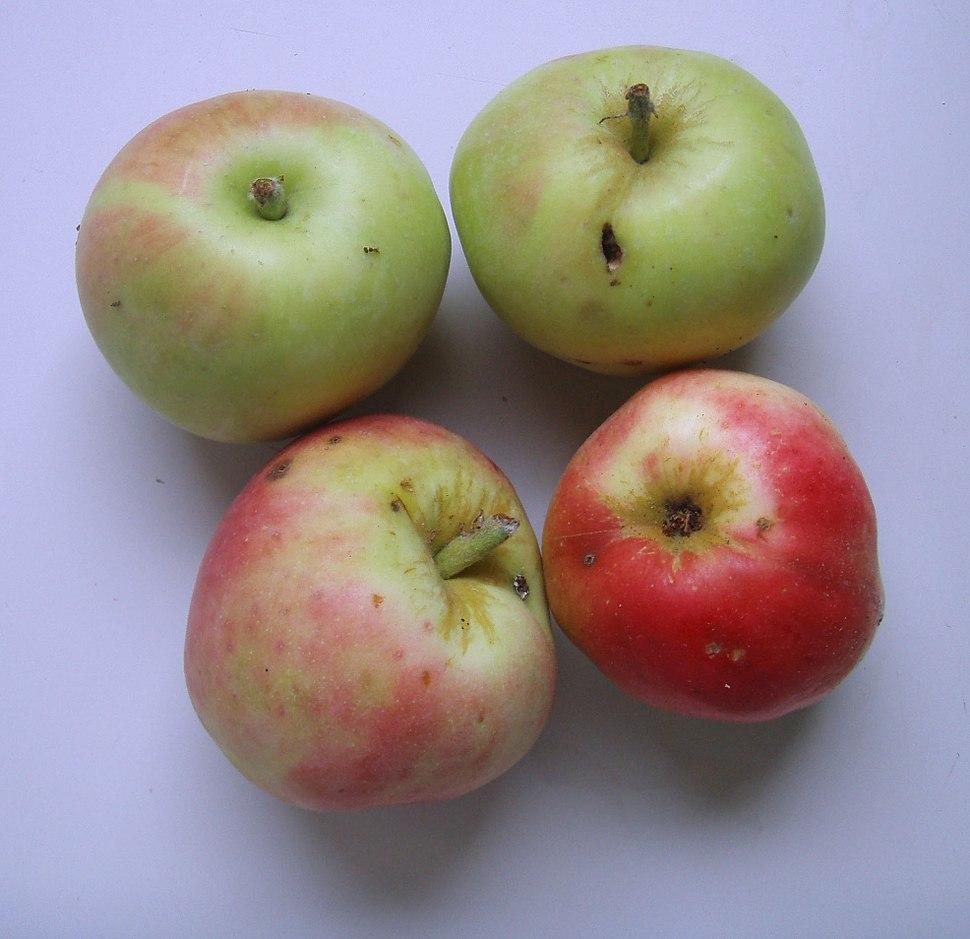 Jabuke petrovace