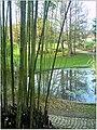 January Frost Botanic Garden Freiburg - Master Botany Photography 2014 - panoramio (11).jpg