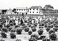 Japanese Immigrants in tea Plantation 01.jpg