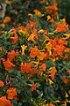 Jardim Botânico da Madeira DSC 0384 (14699894025).jpg