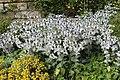 Jardin Botanique Royal Édimbourg 42.jpg
