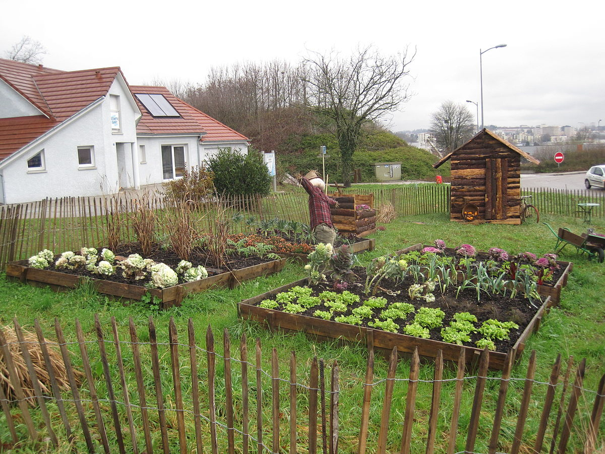 Jardin potager wikip dia for Amenagement potager idees