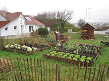 Jardin potager 001.JPG