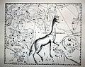 "Johannes Hevelius - Prodromus Astronomia - Volume III ""Firmamentum Sobiescianum, sive uranographia"" - Tavola O - Camelopardalus.jpg"