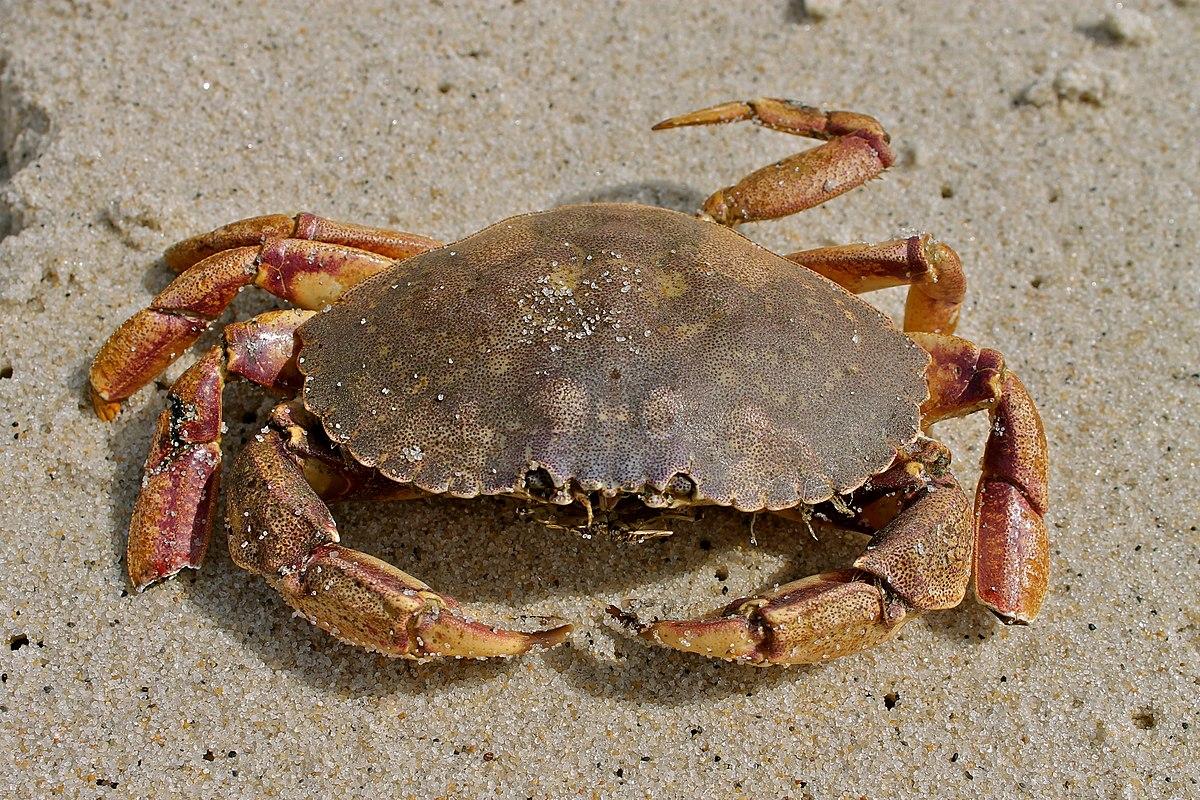 East Bay Crab House Navarre Beach Florida