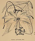 Journal of the Royal Horticultural Society of London (1873) (14761753154).jpg