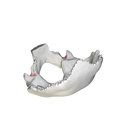 Jugular notch of occipital bone04.png