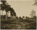 KITLV - 39060 - Muller, Julius Eduard - Paramaribo - Plantation Nieuwgrond (cocoa, cereals, bananas) in Surinam - circa 1885.tif